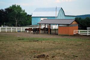 Outdoor Horse Board Available Belleville Belleville Area image 10