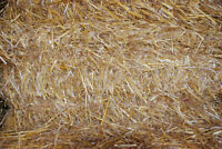 Oat straw for sale, small squares