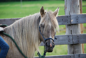 Riding Lesson Horse and Pony for sale