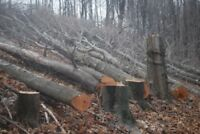 Chainsaw Operator / Tree Removal / Tree Cutting