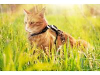Cat Tracking Collar