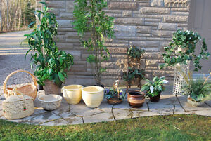 Artificial Trees, Plants and Pots