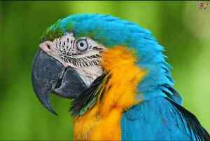 Looking to add a macaw to our family!