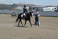 Riding Lessons for Beginners to Advanced Riders.