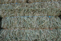 Hay for Sale, Small Squares
