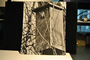 5 Pieces Photo Art Nature . Lot # 4