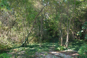 Building Lot in the Heart of Cottage Country & Close To Beach!