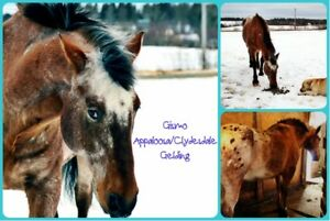 Various equines from mini to horse looking for god homes