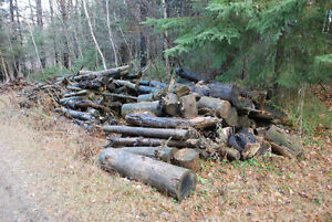 Free Firewood! Stay warm this winter!