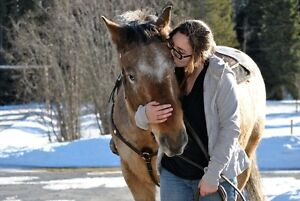 Appaloosa Gelding for sale Prince George British Columbia image 2