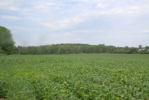 Farm For Sale Eastern Ontario (With Passive Income) Cornwall Ontario image 6