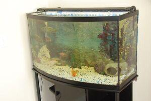 bow fron fish tank with a custom stand