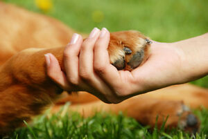 AFFORDABLE REIKI FOR PETS- 30 minute session ONLY $25! Peterborough Peterborough Area image 4