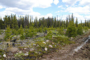 160 Acres North East Ankeo Creek, Chilcotin