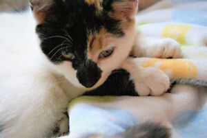 Two adorable female cats for rehoming