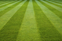 Greenbird Lawn Care (Residential and Commercial)