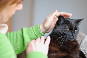 AFFORDABLE REIKI FOR PETS- 30 minute session ONLY $25! Peterborough Peterborough Area image 2