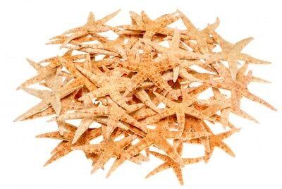 NaDeco® Sugar Seestern 8-10cm, 50 Stück | Deko Seestern | kleine Seesterne | See
