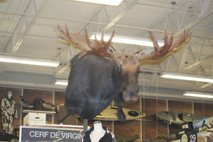 Bougie Taxidermie, Service complet , Valleyfield West Island Greater Montréal image 9
