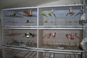 canary or finch flight cages
