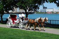 Wedding Carriage Services-2015-16
