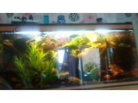 5x2x2 fish tank and fish