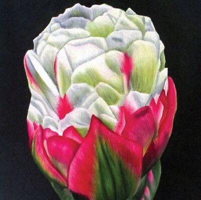 Ice Cream Tulip (ICE CREAM TULIP SQUARE GREETINGS CARD - PRINT OF ART ORIGINAL - STUDIO ANGELA)
