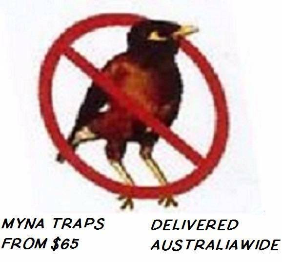 Users Voted Best Value Myna Bird Trap Starling Amp Black