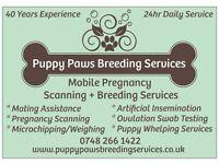 Mobile Dog & Cat Pregnancy Ultrasound Scanning & Other Breeding Services