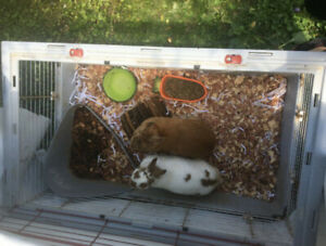 2 Bunnies for Sale -Brothers
