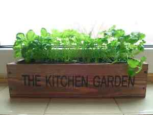 Kitchen garden herb kit indoor windowsill balcony box Kitchen windowsill herb pots