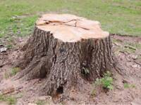 Stumps Away - trees and stumps removed