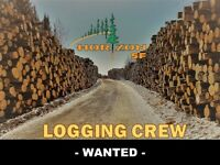 Cut to lenght Logging Crew Wanted!