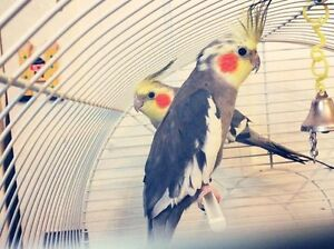 Birds for adoption: Freedom Flight Parrot Sanctuary