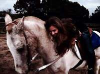 Wanting a free lease horse