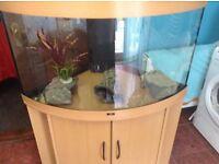 Juwel Trigon 190 Corner Fish Tank And Stand Etc