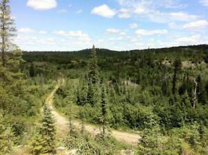 Hunt/bush Property 43 acres