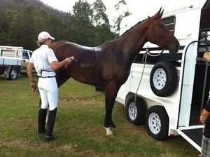 Horse Float - Most awesome Otto Tuza double berth extra high Carseldine Brisbane North East Preview