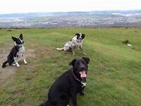 The woofpack dog walking service