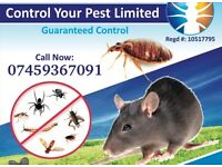 Pest Control Mice Rat Bedbugs Wasps Cockroaches extermination 100% SAME DAY 07459367091