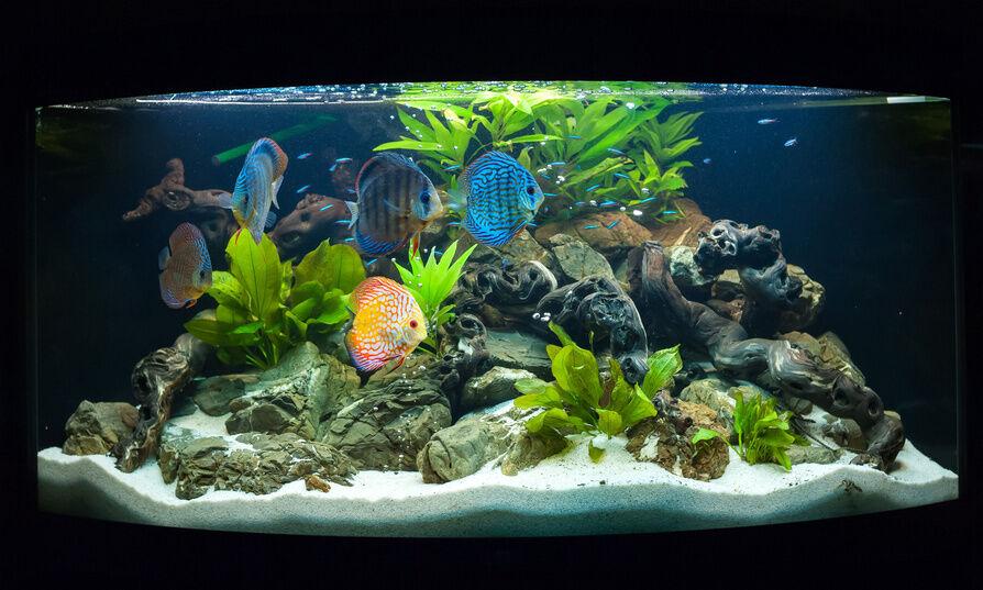 Aquarien f u00fcr jeden Geschmack  s u00fc u00df oder salzig?   eBay