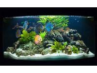 Set of Tropical Fish + 4 Kind Live Plants Free