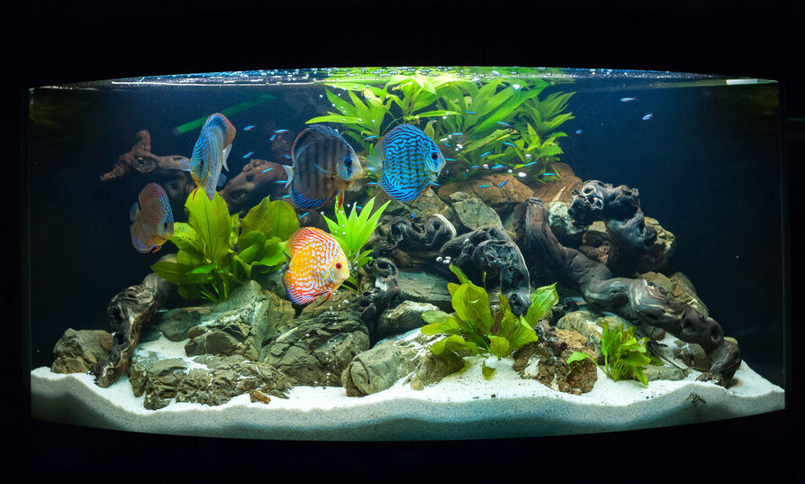 How to care for tropical fish ebay for Fish tank care