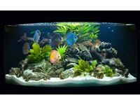 Set of Tropical Fish + Live Plants Free