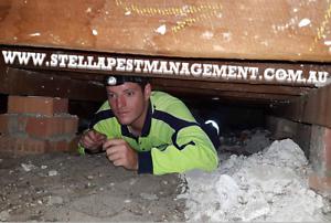 Pest Control - Termite Inspections - $150