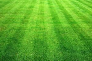 Lawn Care in SW and SE (Southwest & Southeast) Calgary