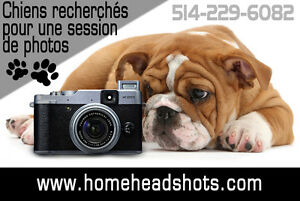 Session photos gratuite pour chiens