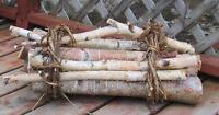 Fresh Cut Bundle of White Birch Lashed Together With Wild Grape