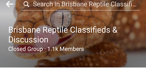 Reptile for sale groups Woodford Moreton Area Preview