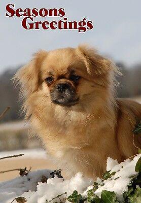 Tibetan Spaniel Dog A6 Christmas Card Design XTIB-13 by paws2print